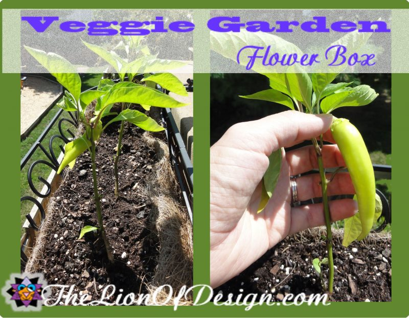 Veggie Garden Flower Box